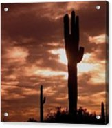 Film Homage Orson Welles Saguaro Cacti The Other Side Of The Wind Carefree Arizona 2004 Acrylic Print