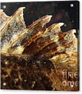 Fin Of Shorthorn Sculpin Acrylic Print