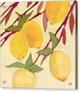 Five Lemons Acrylic Print