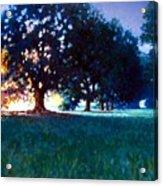 Five Oaks Acrylic Print