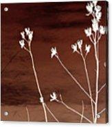 Floral Acrylic Print