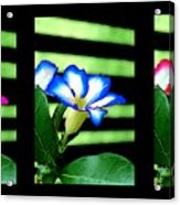 Floral Triptych Acrylic Print