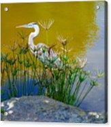 Florida Heron Acrylic Print