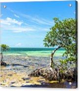 Florida Keys Mangrove Reef Acrylic Print