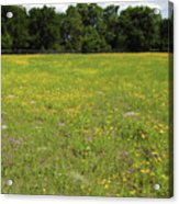 Florida - Wildflowers Acrylic Print