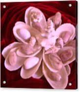 Flower Shell Acrylic Print by Arlin Jules