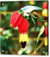 Flowering Plant Acrylic Print