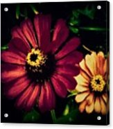 Flowers Lighting Up The Darkness Acrylic Print