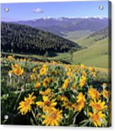 Spring In The Mountains Acrylic Print