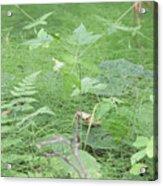 Fluffy Ferns Acrylic Print