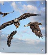 Flying Eagles Acrylic Print