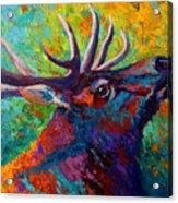 Forest Echo - Bull Elk Acrylic Print