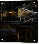 Forest Pond Acrylic Print