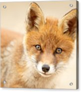 Foxy Face Acrylic Print