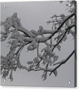 Fresh Snow On Magnolia Tree Acrylic Print