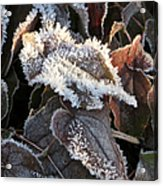 Frost-lined Acrylic Print