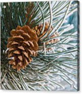 Frosty Pine Needles And Pine Cones Acrylic Print