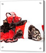 Funny Christmas Santa Cat Laying Acrylic Print