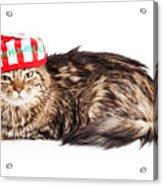 Funny Grumpy Christmas Cat Acrylic Print
