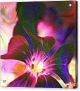 Garden Glow Acrylic Print