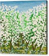 Garden In Blossom Acrylic Print