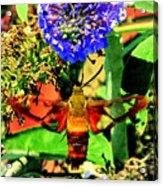 Georgian Moth Acrylic Print