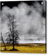 Geysers And Steam Rising In Yellowstone National Park Acrylic Print