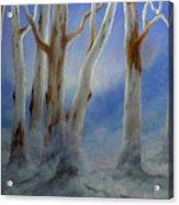 Ghostgum Mist Acrylic Print