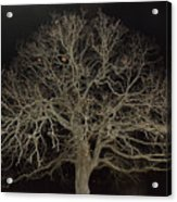 Ghostly  Tree Acrylic Print