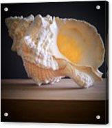 Giant Frog Shell Acrylic Print