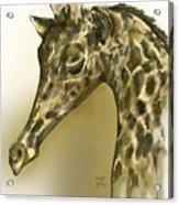 Giraffe Contemplation Acrylic Print