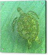 Gliding Green  Acrylic Print
