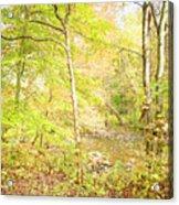 Glimpse Of A Stream In Autumn Acrylic Print