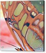 Golden Butterfly Acrylic Print
