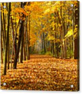 Golden Days Acrylic Print