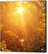 Golden Days Of Autumn Acrylic Print