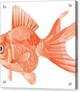 Goldfish Acrylic Print