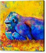 Gorilla Gorilla Acrylic Print by Betty LaRue