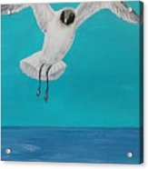 Graceful Landing Acrylic Print