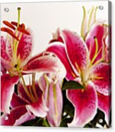 Graceful Lily Series 10 Acrylic Print