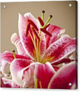 Graceful Lily Series 14 Acrylic Print