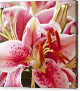 Graceful Lily Series 15 Acrylic Print