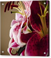 Graceful Lily Series 16 Acrylic Print