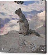 Grand Canyon Squirrel Acrylic Print
