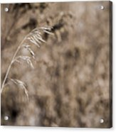 Grass Blade Acrylic Print