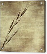 Grass Seeds Acrylic Print