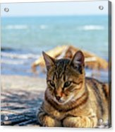 Gray Cat On The Background Of The Sea 1 Acrylic Print