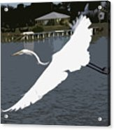 Great Egret At Melbourne Beach Acrylic Print