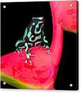 Green And Black Poison Dart Frog Acrylic Print