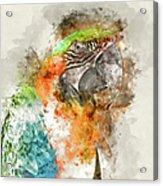 Green And Orange Macaw Bird Digital Watercolor On Photograph Acrylic Print